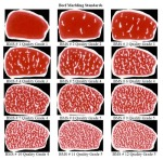 Beef marbling chart