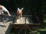 PIG ROAST Aug 2013 020